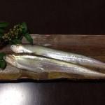 筑後川の珍魚「エツ」のご紹介